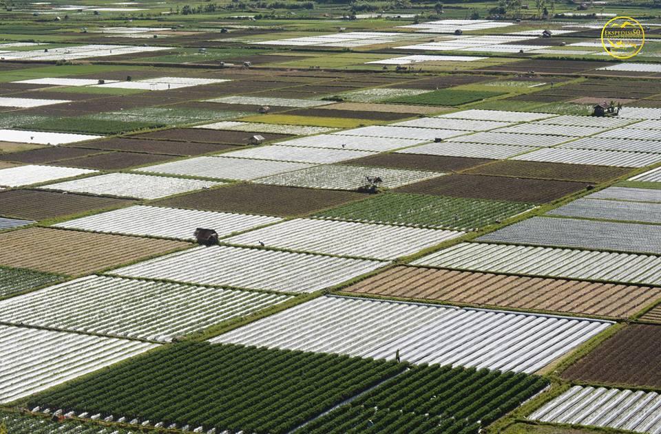masyarakat hortikultura