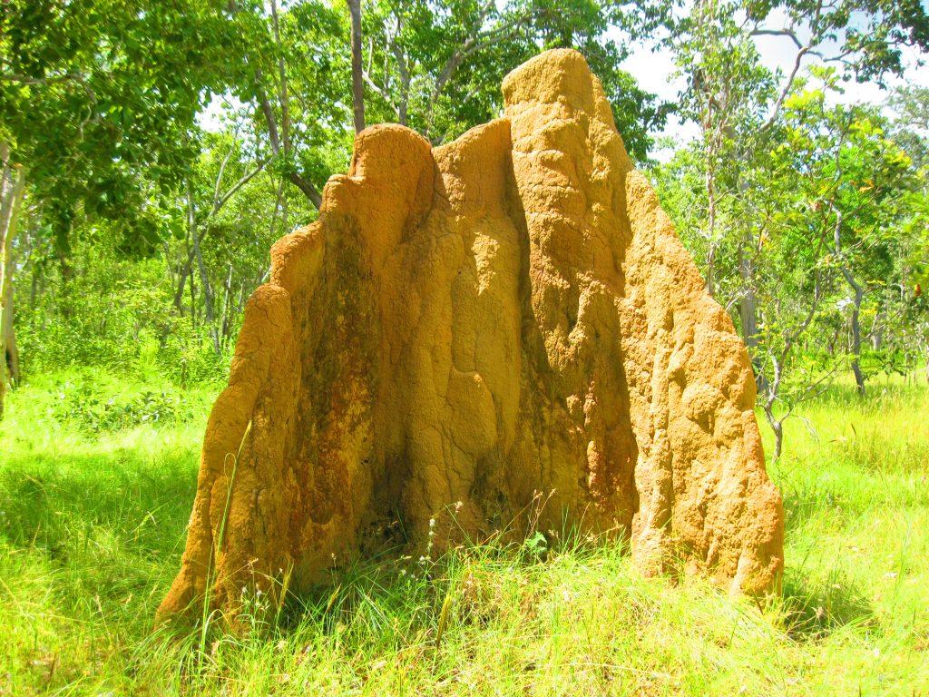 Bomi atau rumah semut